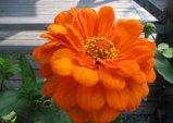 Vackra blommor i julimånad