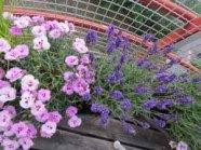 Blommor på vår balkong